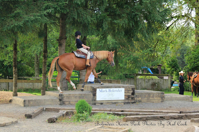 Trail Horse Challenge Horse Obstacles Challenges